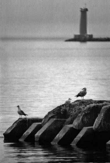 Lighthouse with gulls