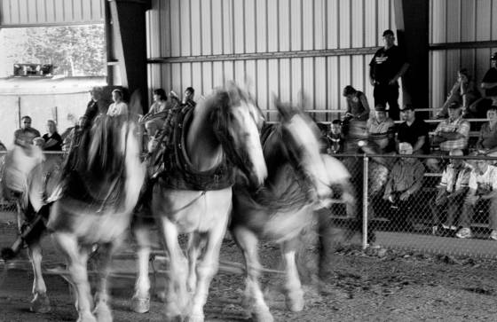 Horse pull 2   union fair