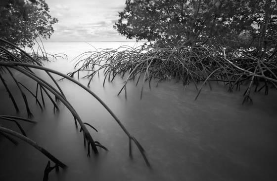 Mangroves  5
