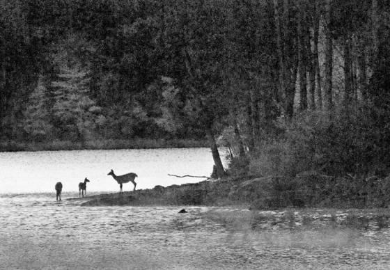 Cooper lake  9
