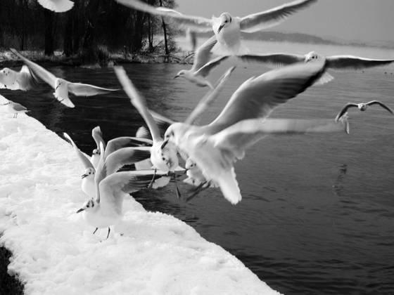 Seagulls jpg jpg
