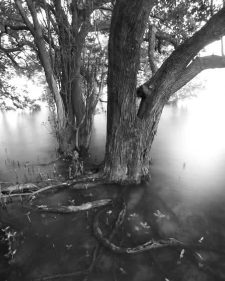 Black mangal forest