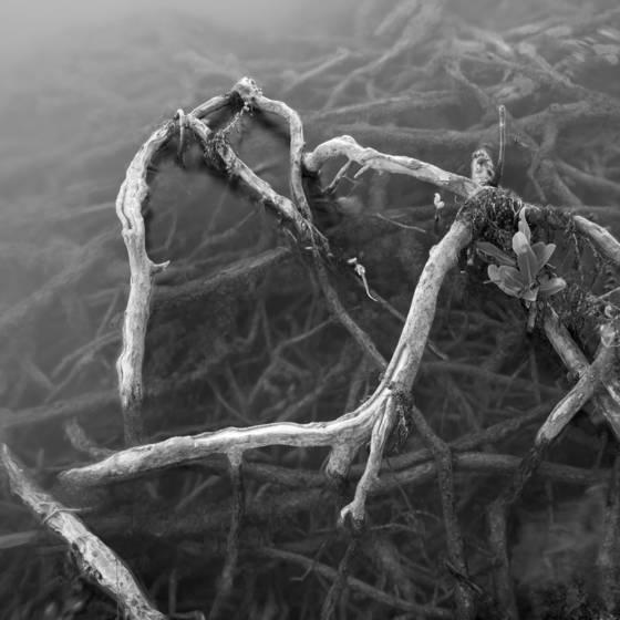 Root study 3