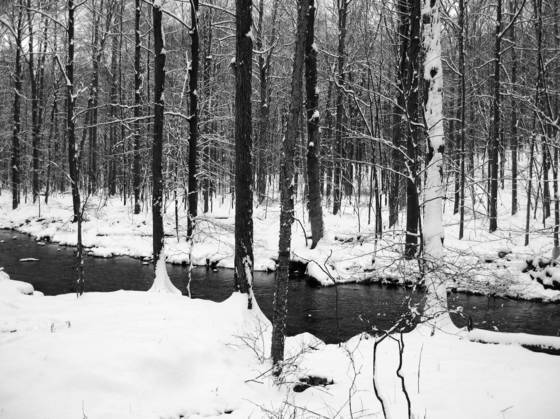Little river preserve 8