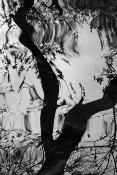 Darwin pond reflection