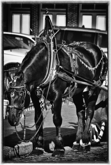 Tour horse