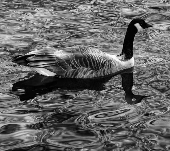 Reflective goose