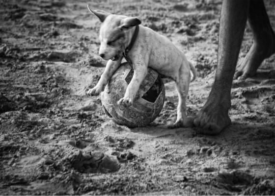 Soccer puppy