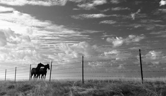 Horse s whisper