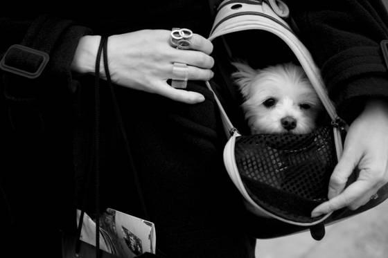 Puppy chic