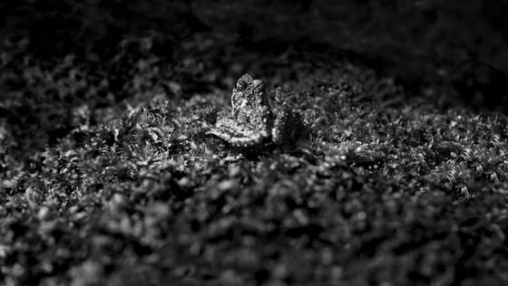 Moss frog