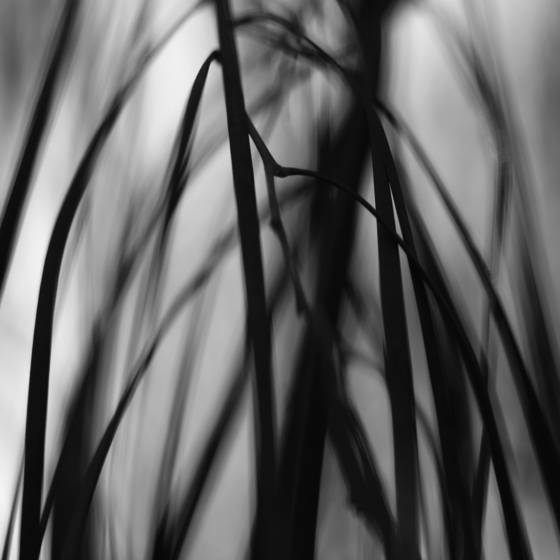 Botanic abstract