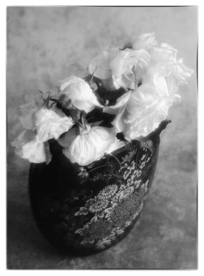 Soft roses  1
