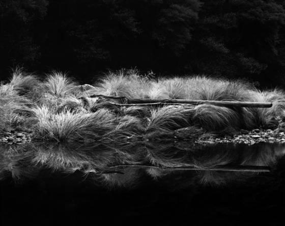 Grass   driftwood