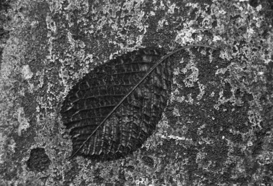 Dissolving leaf