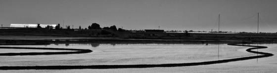 Yolo causeway