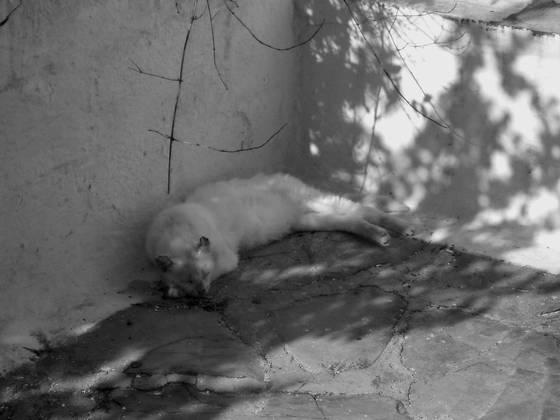 Skopelos island cat