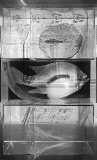 Cabinet with fish