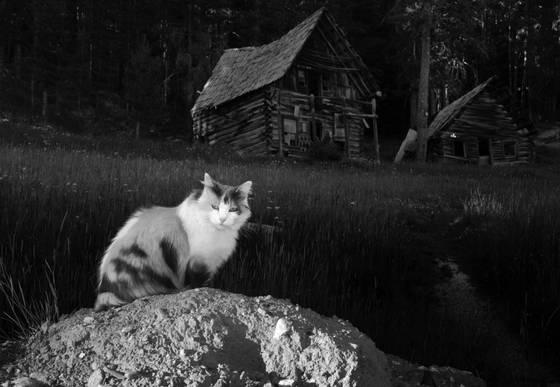 Burgdorf cat