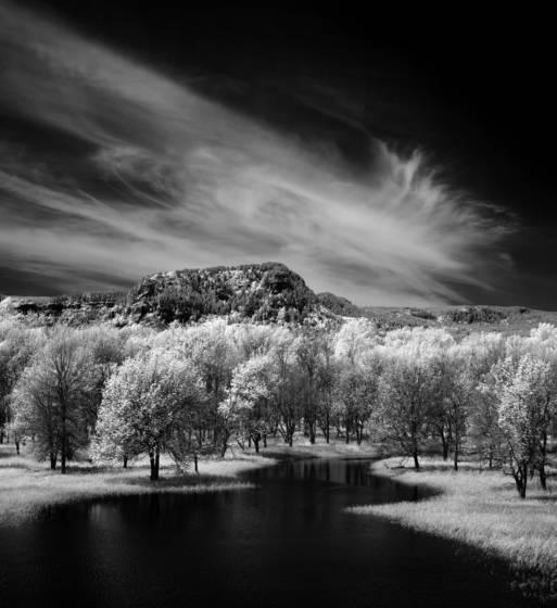 Columbia gorge meadow