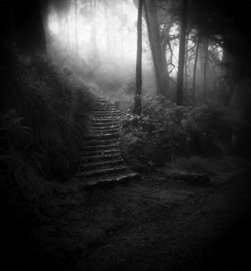 Davidson steps holga