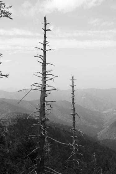 2 dead trees