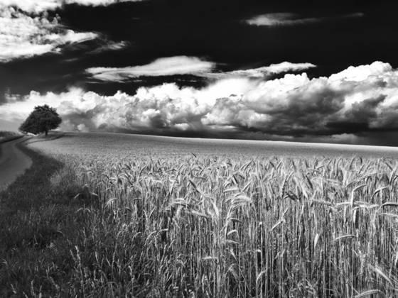 Steinwend fields