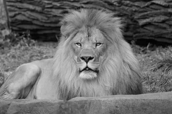 King in repose