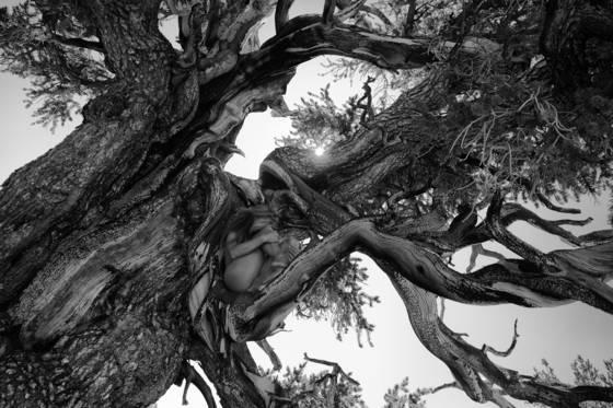 Bristlecone nude one