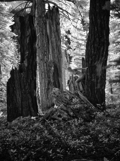 Crumbling redwood nude