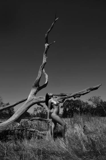 Twisted tree nude
