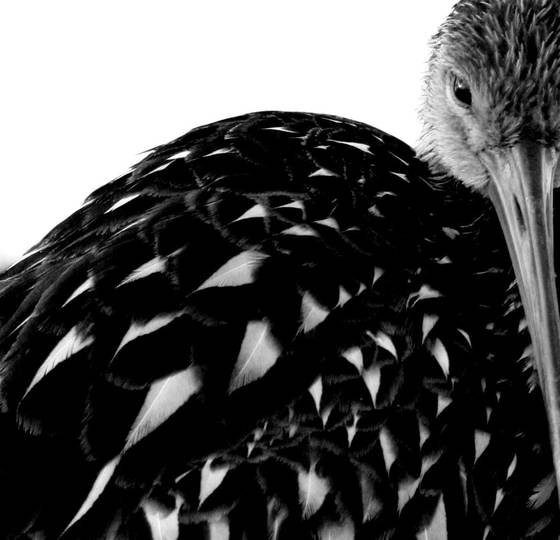 Bird s eye view