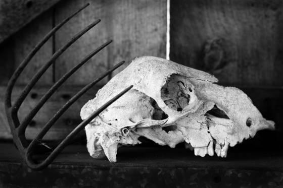Skull   pitchfork