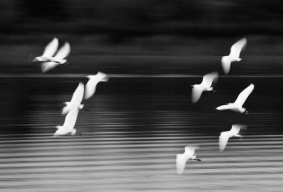 Ten egrets