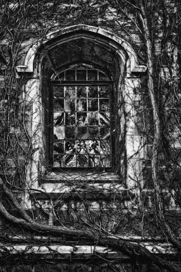 Law quad window