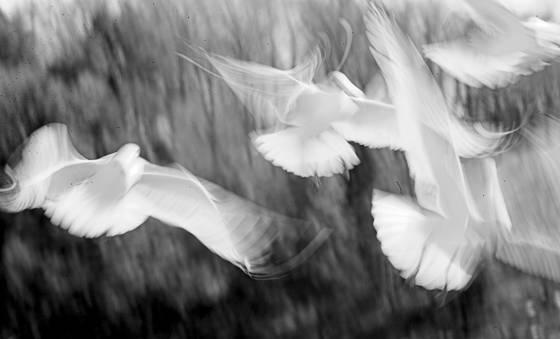 Seagulls dance