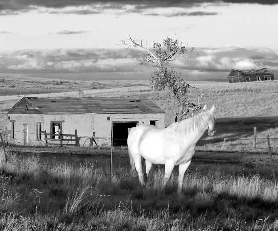 Stone susan  white horse