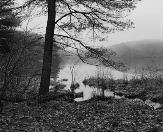 Benedict pond study 2