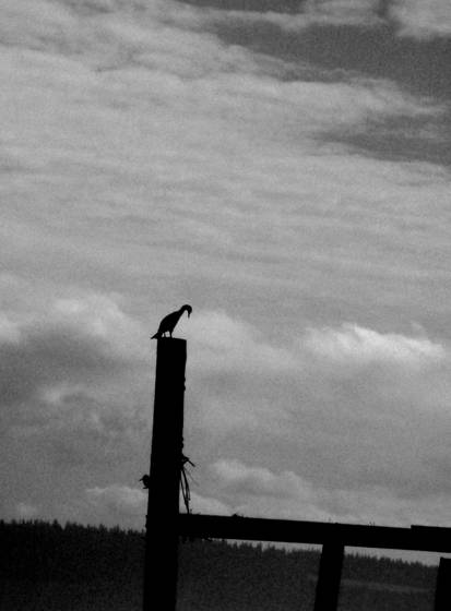 Bird on a piling