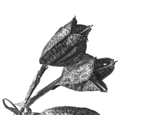 Dried plant 1