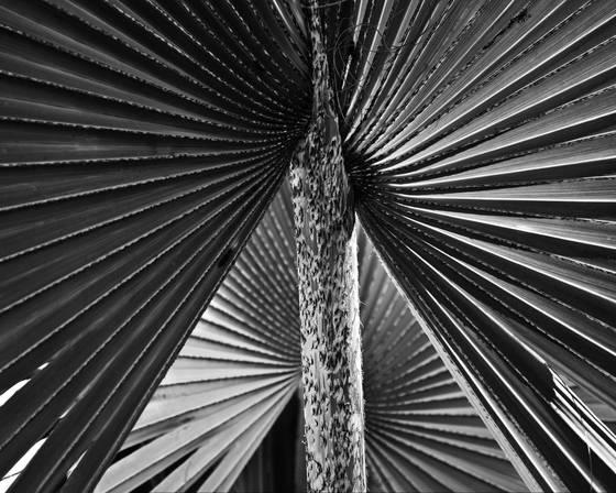 Botanical weave 1