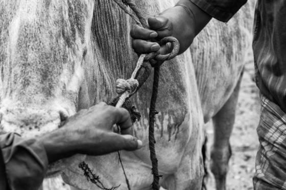 At cattle fair