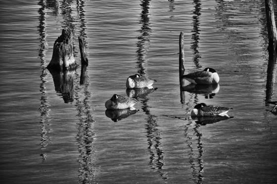 Wetlands  03