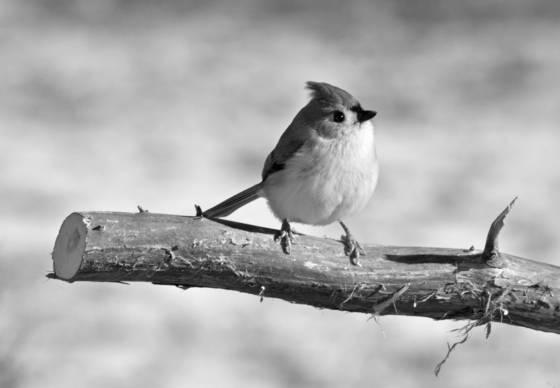 Tiny bird 1