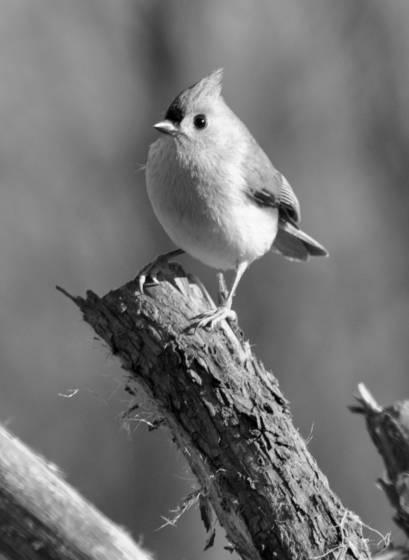 Tiny bird 2