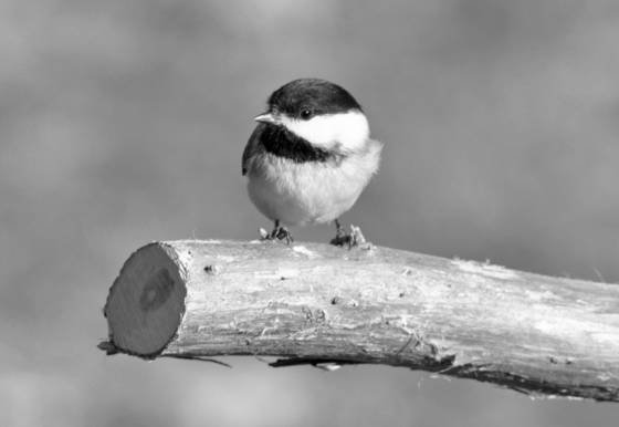 Tiny bird 3