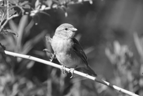 Tiny bird 6