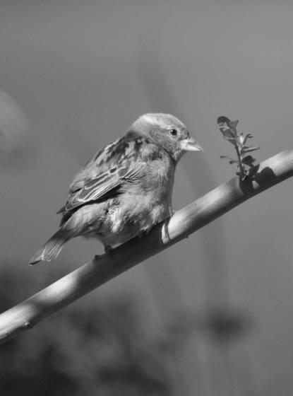 Tiny bird 9