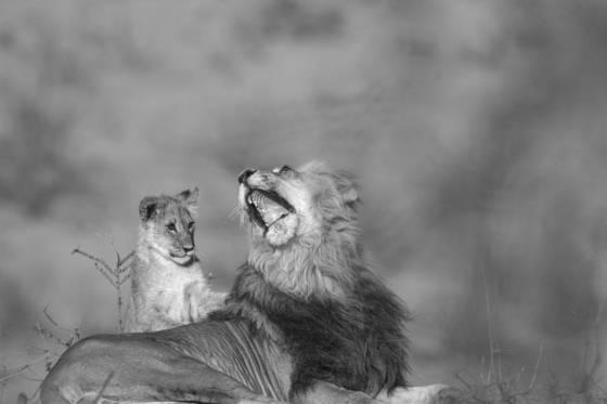 A roar unleashed