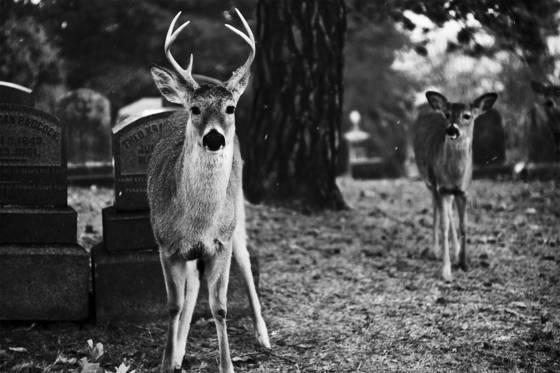 The buck stops
